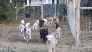 Zaměstnanci útulku mysleli, že žertuje - chtěl adoptovat všechny psy z útulku. M