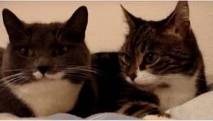 Majitel natočil své 2 kočky, jak leží na posteli a povídají si. Sledujte, jak se