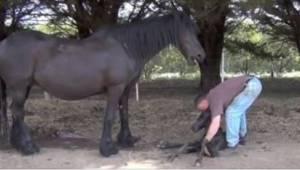 Nejprve pomohl klisně, poté hříběti. Překrásné video!