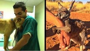 12 zvířat, která jsou vděčná svým zachráncům!