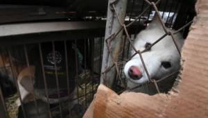 Vláda v Koreji se neúspěšně snažila zastavit prodej psího masa během olympijskýc