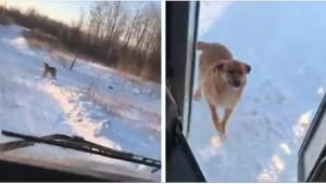Řidič autobusu každý den jezdí na jedno místo. Čeká ho tam hladový pes.