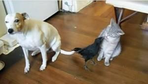 Tato zvířata čekala jistá smrt, ale zachránil je jejich nový majitel. Neuvěříte,