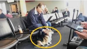 Fenka se přiblížila k cizímu člověku na letišti. Měla k tomu důvod.