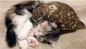 Pečoval o sovu a aby měla společnost, adoptoval koťátko. Podívejte se na ty rozt