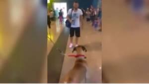 Pes čekal na svého pána na letišti. Jeho reakce zcela dojala dav lidí.