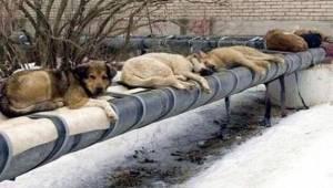 Místo toho, aby v Rusku založili útulky a kastrovali toulavá zvířata, zvolili mn
