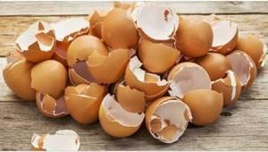 9 důvodů, proč nevyhazovat vaječné skořápky ale raději je využít v zahradě.
