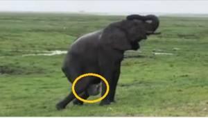 Slonice začala rodit a po chvíli pro ni jiní sloni udělali něco krásného.