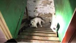Ve sklepu svého domu našel psa na řetězu. Jeho reakce byla úžasná!