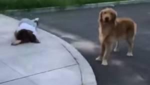 Záchranáři se blíží ke zraněné ženě když tu její pes poté udělá něco, co je vzru