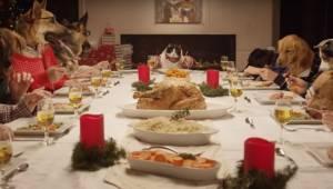 Když jsem uviděla 13 psů a 1 kočku sedět u stolu, nemohla jsem se přestat smát!