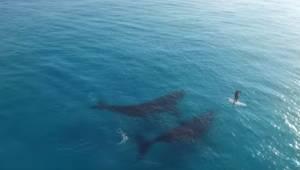 Podívejte se, co se stane, když dvě velryby uvidí na moři osamělého člověka ...